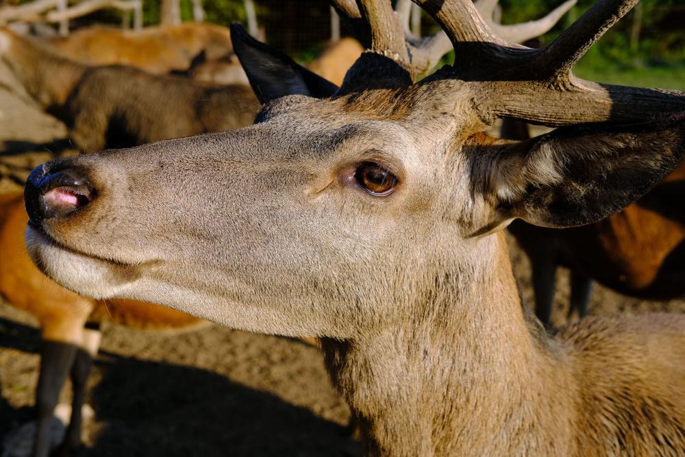 Deer valley_01