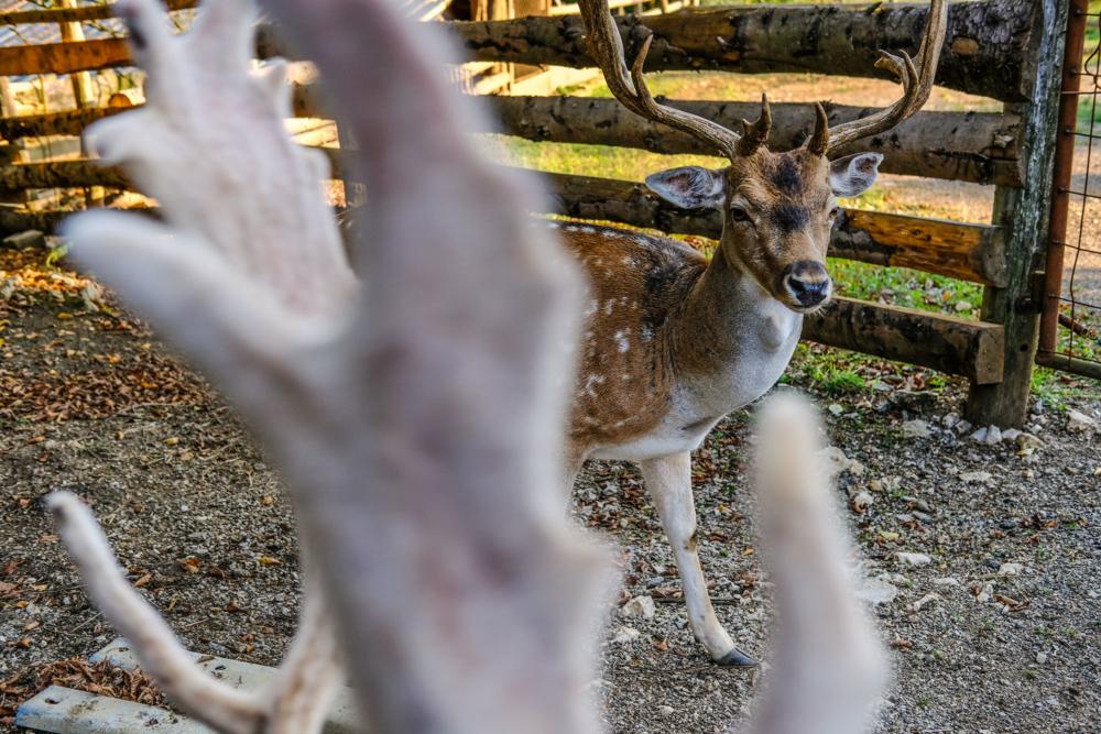 Deer valley_02