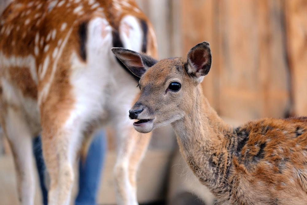 Deer valley_04