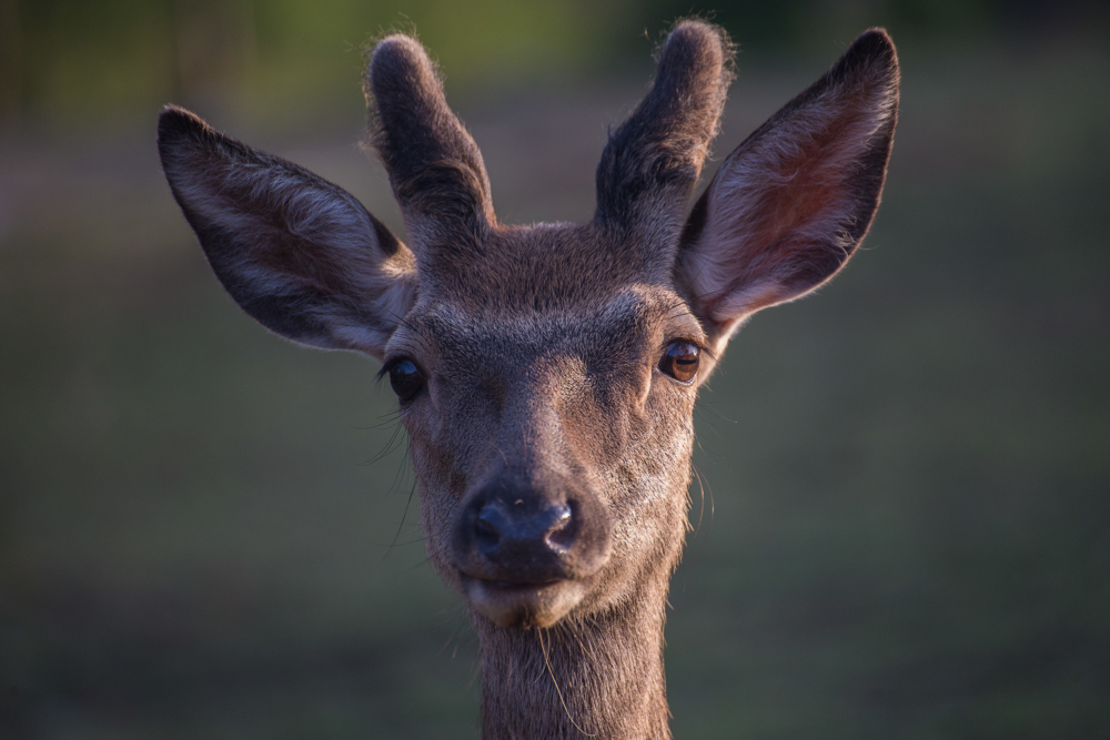 Deer valley_08