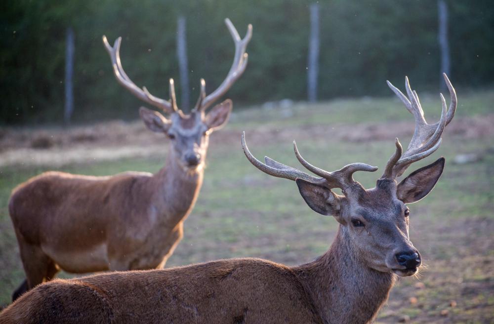 Deer valley_10
