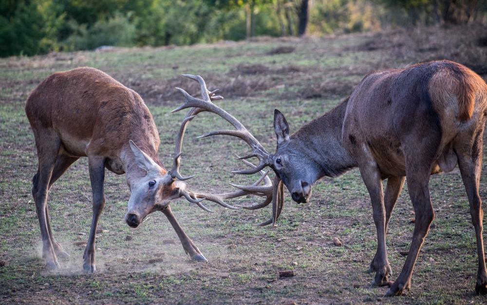 Deer valley_11