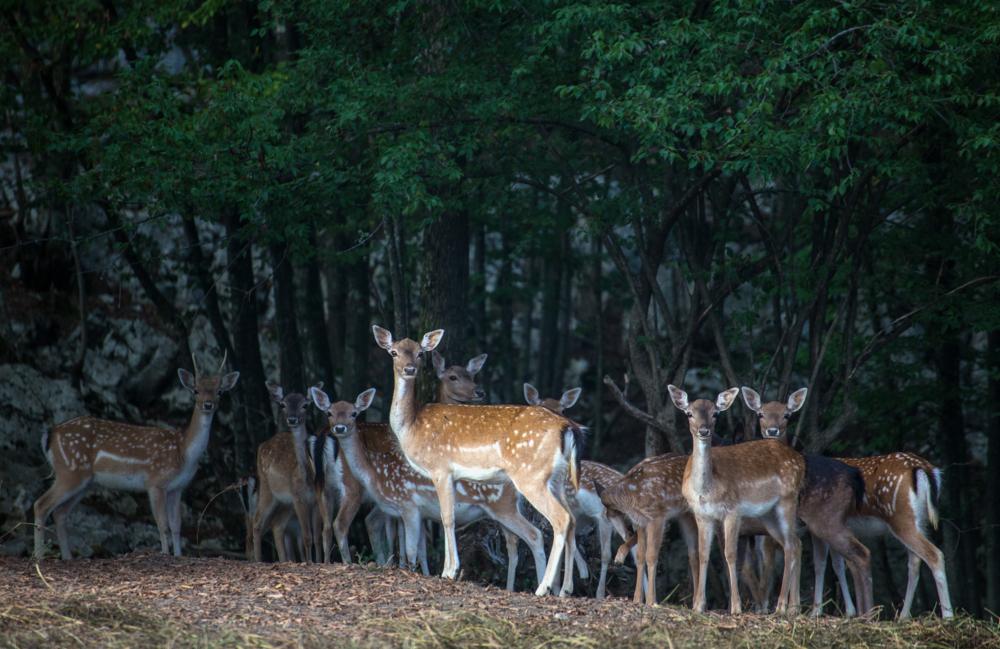 Deer valley_12